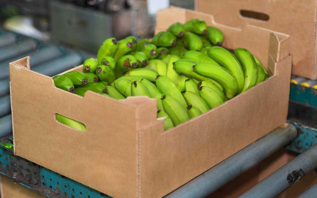 ¿Por qué controlar el peso de cajas de banano?