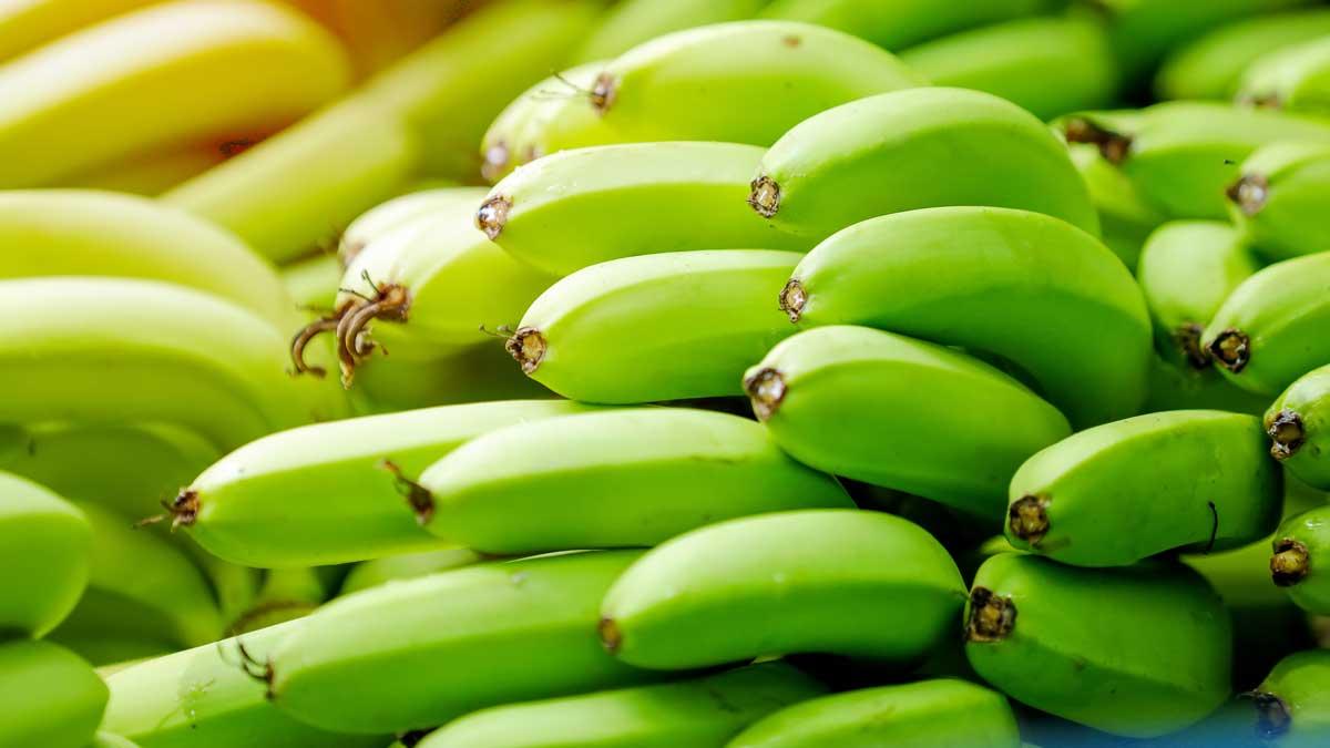 cultivo de banano, software agricola agro iq